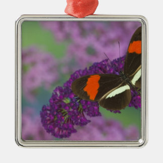 Sammamish Washington Photograph of Butterfly 34 Christmas Ornament