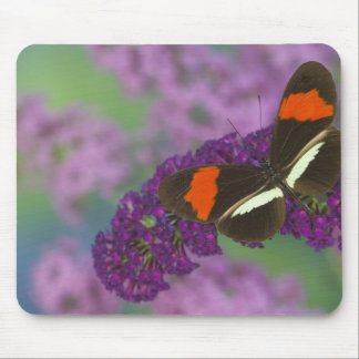 Sammamish Washington Photograph of Butterfly 34 Mouse Mat