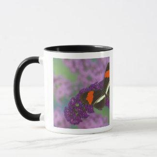 Sammamish Washington Photograph of Butterfly 34 Mug