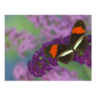 Sammamish Washington Photograph of Butterfly 34 Postcard