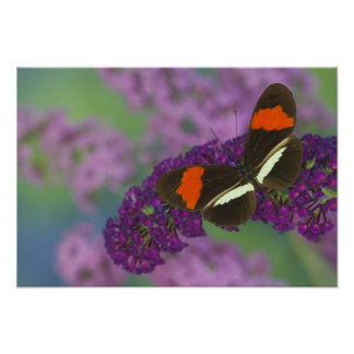 Sammamish Washington Photograph of Butterfly 34 Poster