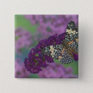 Sammamish Washington Photograph of Butterfly 35 15 Cm Square Badge