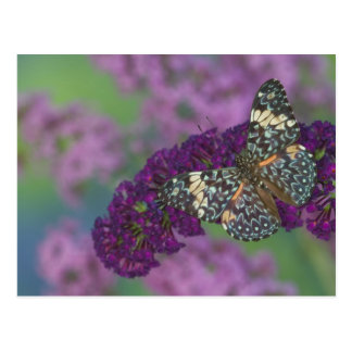 Sammamish Washington Photograph of Butterfly 35 Postcard