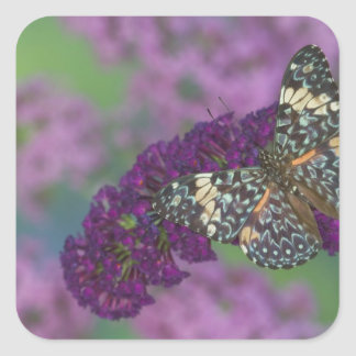 Sammamish Washington Photograph of Butterfly 35 Square Sticker