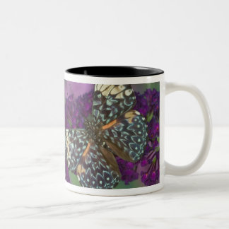 Sammamish Washington Photograph of Butterfly 35 Two-Tone Coffee Mug