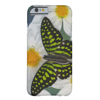 Sammamish Washington Photograph of Butterfly 36 Barely There iPhone 6 Case