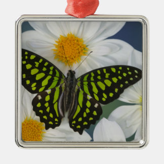 Sammamish Washington Photograph of Butterfly 36 Christmas Ornament