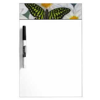 Sammamish Washington Photograph of Butterfly 36 Dry Erase Board