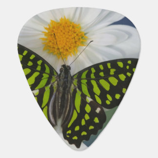Sammamish Washington Photograph of Butterfly 36 Guitar Pick