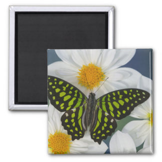 Sammamish Washington Photograph of Butterfly 36 Magnet