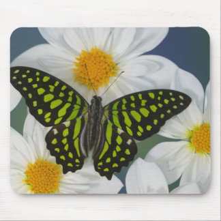 Sammamish Washington Photograph of Butterfly 36 Mouse Mat