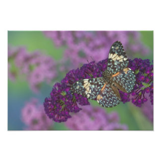 Sammamish Washington Photograph of Butterfly 37