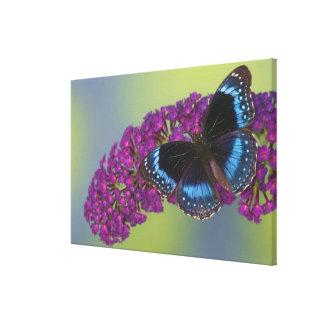 Sammamish Washington Photograph of Butterfly 37 Canvas Print