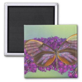 Sammamish Washington Photograph of Butterfly 37 Magnet
