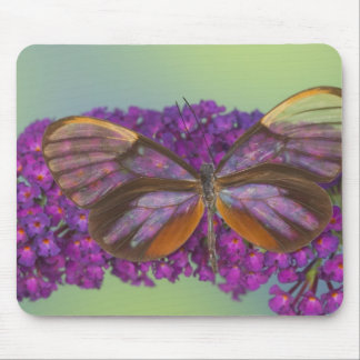 Sammamish Washington Photograph of Butterfly 37 Mouse Mat