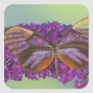Sammamish Washington Photograph of Butterfly 37 Square Sticker