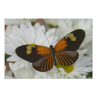 Sammamish Washington Photograph of Butterfly 38
