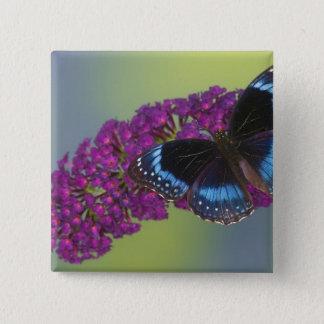 Sammamish Washington Photograph of Butterfly 38 15 Cm Square Badge