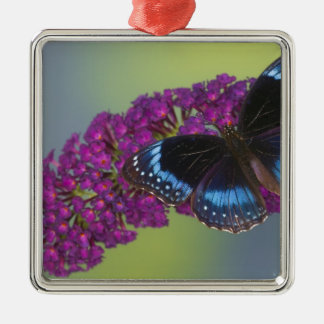 Sammamish Washington Photograph of Butterfly 38 Christmas Ornament