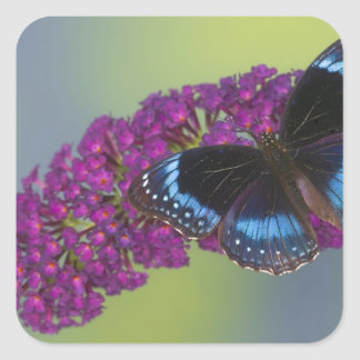 Sammamish Washington Photograph of Butterfly 38 Square Sticker