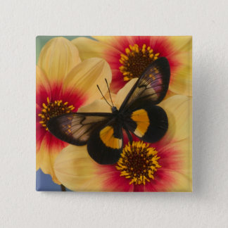 Sammamish Washington Photograph of Butterfly 39 15 Cm Square Badge