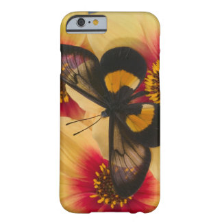 Sammamish Washington Photograph of Butterfly 39 Barely There iPhone 6 Case