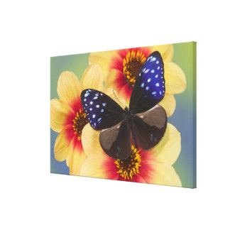 Sammamish Washington Photograph of Butterfly 39 Canvas Print