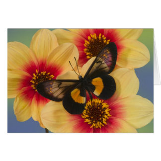 Sammamish Washington Photograph of Butterfly 39 Card