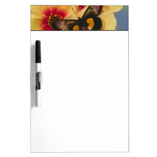 Sammamish Washington Photograph of Butterfly 39 Dry Erase Board