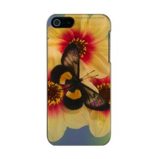 Sammamish Washington Photograph of Butterfly 39 Incipio Feather® Shine iPhone 5 Case