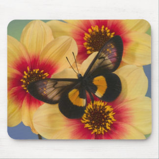 Sammamish Washington Photograph of Butterfly 39 Mouse Mat