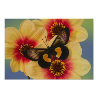Sammamish Washington Photograph of Butterfly 39 Poster