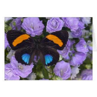 Sammamish Washington Photograph of Butterfly 3 Card