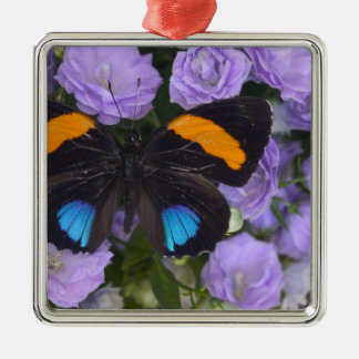 Sammamish Washington Photograph of Butterfly 3 Christmas Ornament