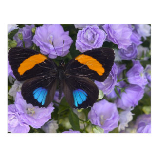 Sammamish Washington Photograph of Butterfly 3 Postcard