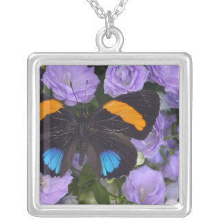 Sammamish Washington Photograph of Butterfly 3 Square Pendant Necklace
