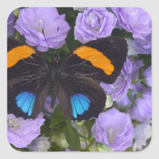 Sammamish Washington Photograph of Butterfly 3 Square Sticker