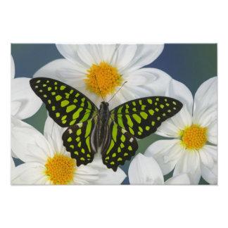 Sammamish Washington Photograph of Butterfly 40