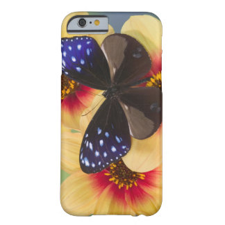 Sammamish Washington Photograph of Butterfly 40 Barely There iPhone 6 Case