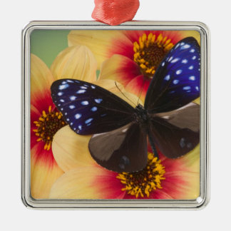 Sammamish Washington Photograph of Butterfly 40 Christmas Ornament