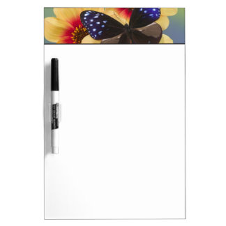 Sammamish Washington Photograph of Butterfly 40 Dry Erase Board