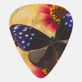Sammamish Washington Photograph of Butterfly 40 Plectrum