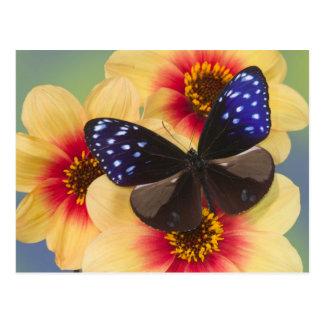 Sammamish Washington Photograph of Butterfly 40 Postcard