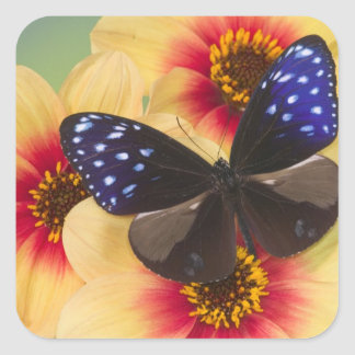 Sammamish Washington Photograph of Butterfly 40 Square Stickers