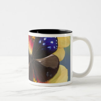 Sammamish Washington Photograph of Butterfly 40 Two-Tone Coffee Mug