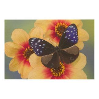 Sammamish Washington Photograph of Butterfly 40 Wood Print