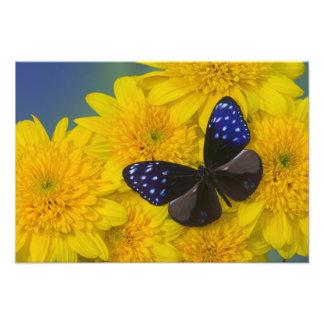Sammamish Washington Photograph of Butterfly 41