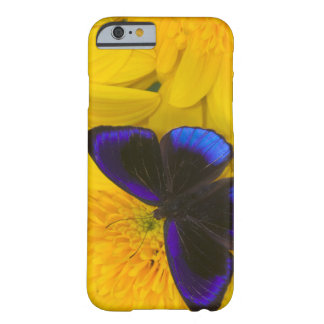 Sammamish Washington Photograph of Butterfly 41 Barely There iPhone 6 Case