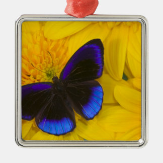 Sammamish Washington Photograph of Butterfly 41 Christmas Ornament