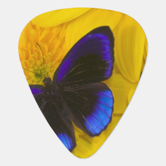 Sammamish Washington Photograph of Butterfly 41 Plectrum